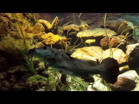 Amsterdam Aquarium 26.11.2015!