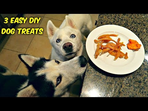 3 Easy DIY Treats for Your Dog