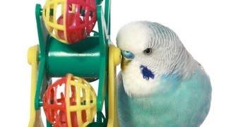 What Are the Best Bird Toys?   Pet Bird