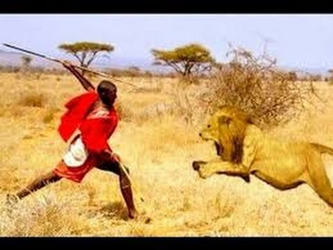Man vs Lions. Maasai Men Stealing Lion's Food Without a Fight. new