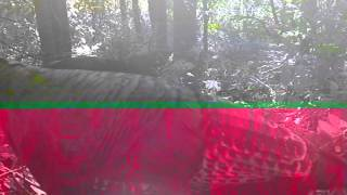 Turkey Trail Cam Fall 2012 K3 Hunting and Trapping
