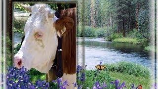 Корова и колокольчик. (Животные. Звуки Австрии)
