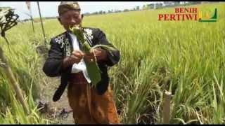 BENIH PERTIWI TV - Labuh Massal & Panen Raya PAK TIWI-1 di Tulung Agung, Jawa Timur Mp3
