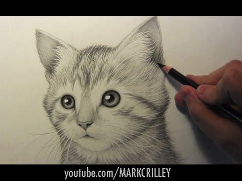 Drawing Time Lapse: Kitten