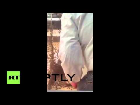 France: Swarm of 15,000 bees attack jewellery shop in Montpellier