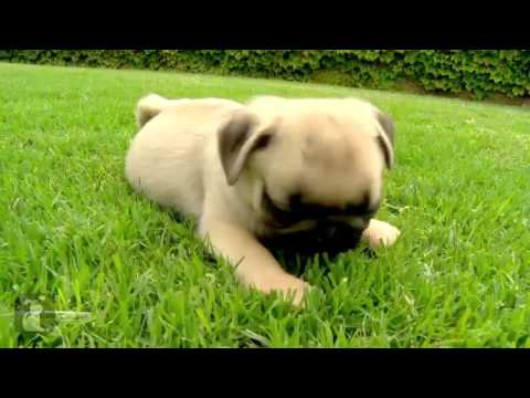Cute Dog Top 10 Funny And Cute Dog Videos Youtube