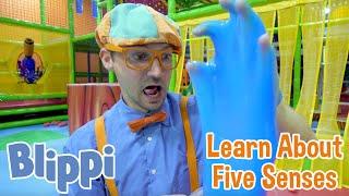 BLIPPI   Blippi Teaches About Five Senses   Learn with Blippi   Educational Videos for Kids