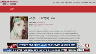 Recovered fighting dog up for national hero dog award