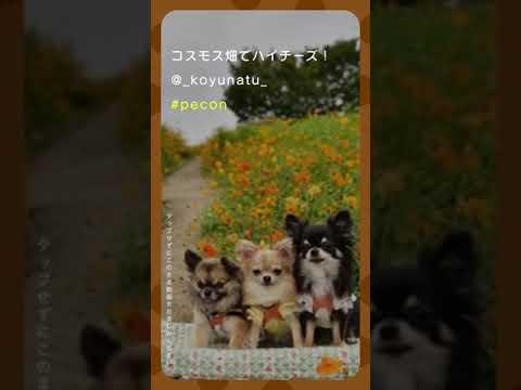 【Pecon】今日のペット動画