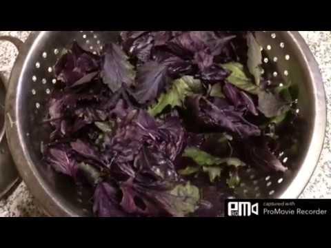 Соус песто рецепт в домашних условиях на зиму из фиолетового базилика