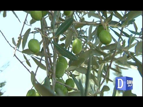 Olive garden in Chakwal - YouTube