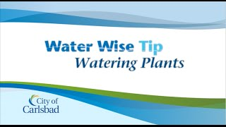 Water Saving Tips:  Watering Plants