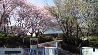 堺市立庭代台小学校 桜  2012.4.12
