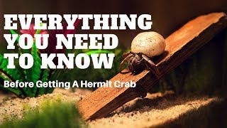 Things You Should Know Before Getting A Hermit Crab