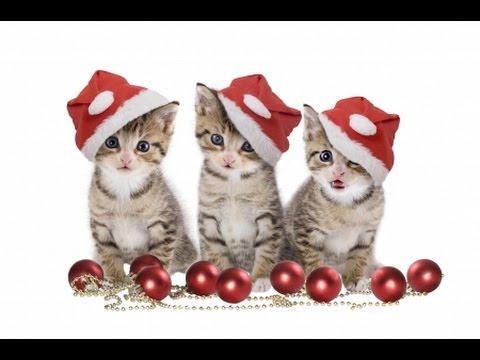 funny cats happy new year 2015