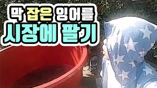 """[작약꽃TV]전통시장에서 """"막""""잡은 …"""