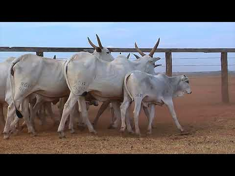 LOTE 14   4014, 4132, 4654, 5110, 5340, 1535