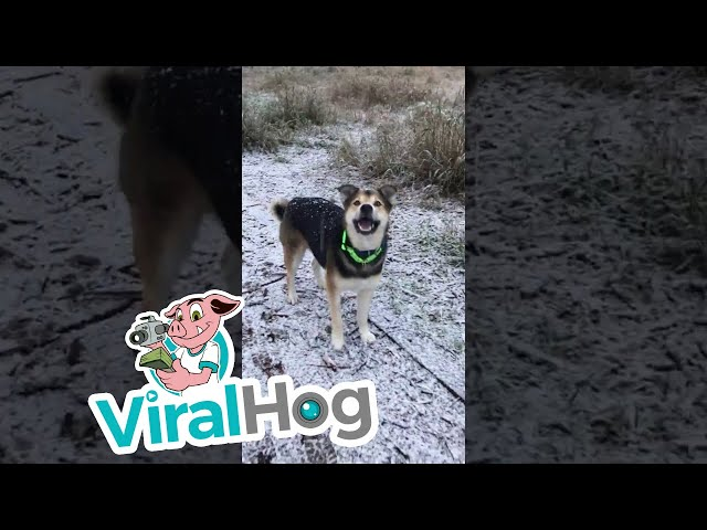 Cute Dog Trying to Catch Snow