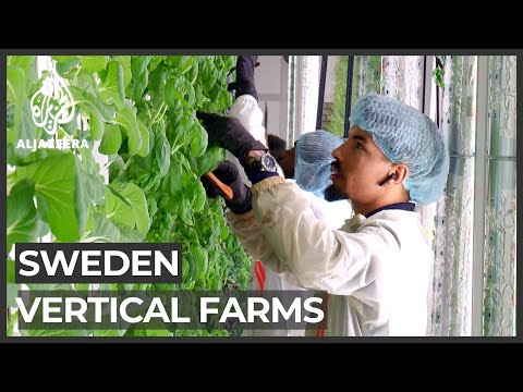 Can Sweden's 'vertical farms' solve global food shortages?