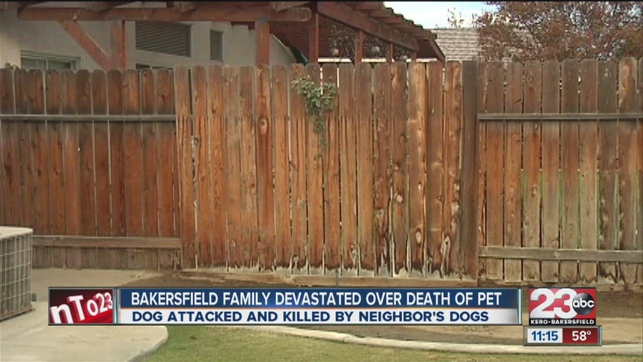 Pug mauled to death - YouTube