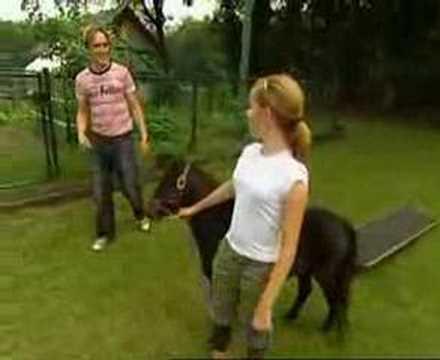 jack russell neukt een paard 2 | Doovi: www.doovi.com/video/jack-russell-neukt-een-paard-2/RZj06QeDuUU