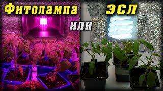 Фитолампа или ЭСЛ? Сравнение роста растений. Growing Lamp test