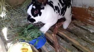 Кролик Рекс Далматинец кушает травку!Маша и Паша.