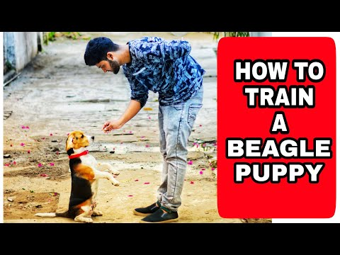 How to easily train your dog ||Dog Training in Hindi ! *Dog Training tips and tricks*