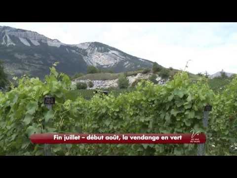 Des vignerons, un terroir, une passion - raconté par Pierre Arditi