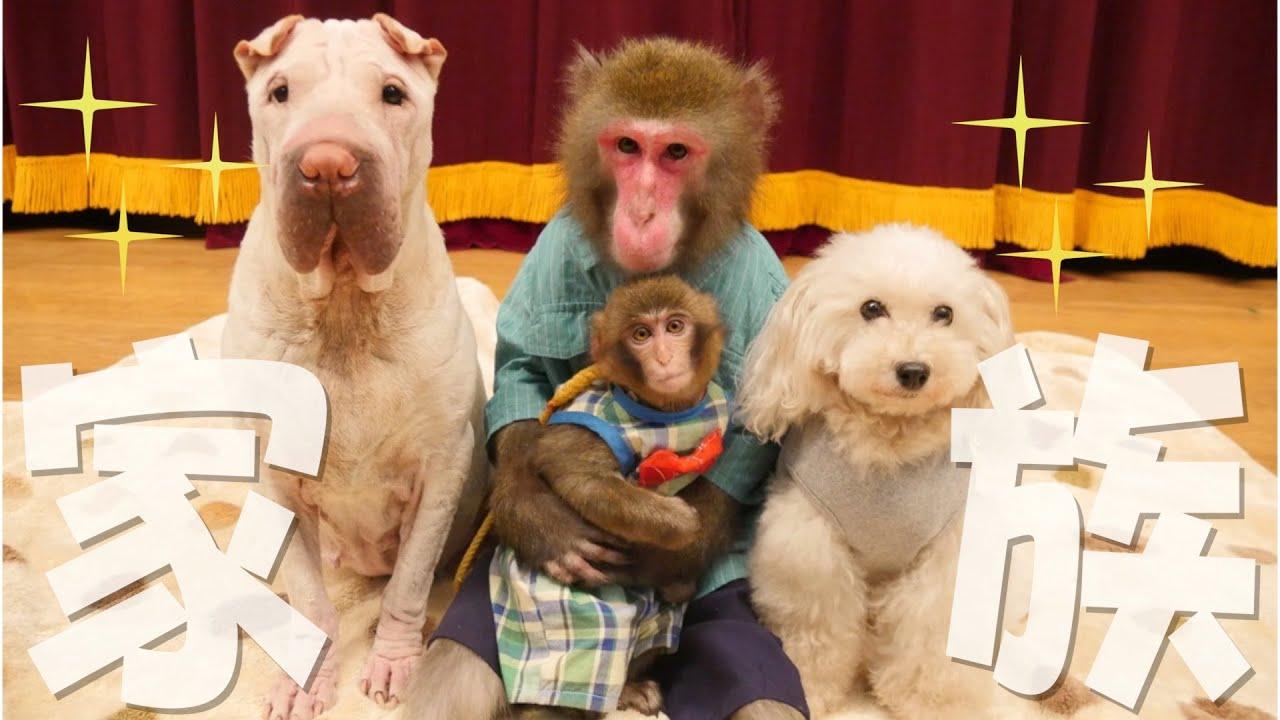 【ついに】新入りの赤ちゃん猿がみんなを信頼して「家族」になった瞬間。