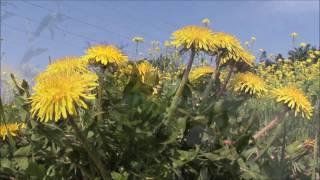 「花のワルツ」カラオケ・オリジナル歌手・藤あや子