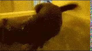 Кот в ванной 2