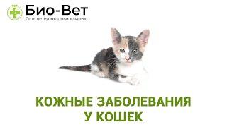 Кожные заболевания у кошек. Ветеринарная клиника Био-Вет.