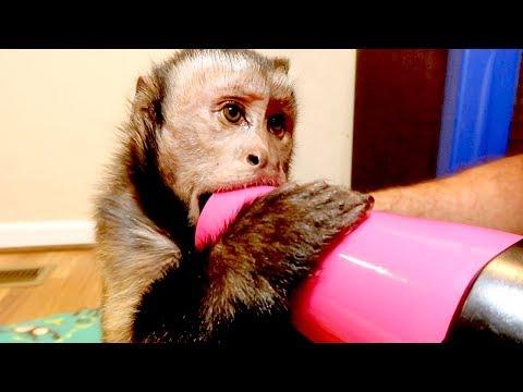 Monkey Loves the Hairdryer