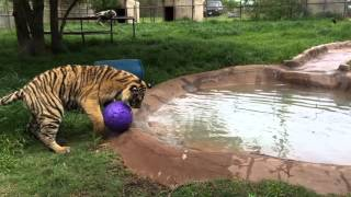 ShereKhan with his ball