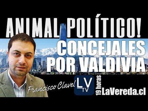 Concejales por Valdivia - en Animal Político
