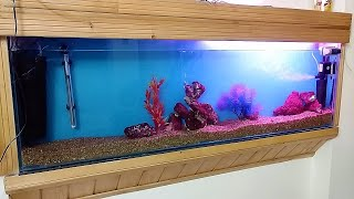New Look of My Fish Tank || Beautiful Aquarium With Beneficial Bacteria
