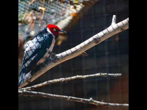 SLIDESHOW OF EXOTIC BIRDS