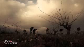 LABORES EN LOS BALANCINES: LA PODA (Enero 2014)