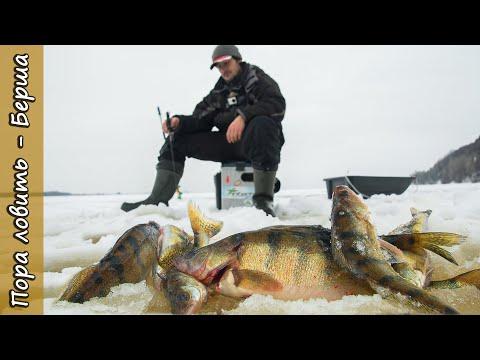Вот это берши!!! Ловля берша на тюльку на реке Кама. Как поймать берша зимой. [Пора ловить Берша]
