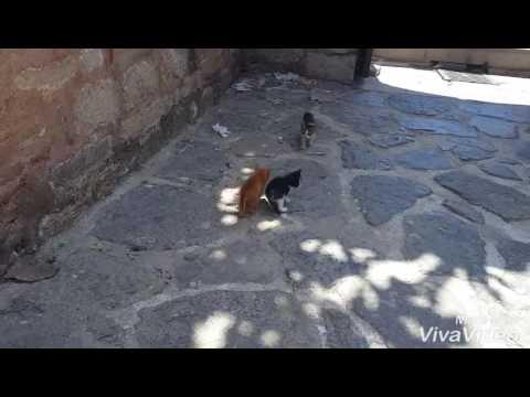 Bunlar çok tatlı kediçikler.