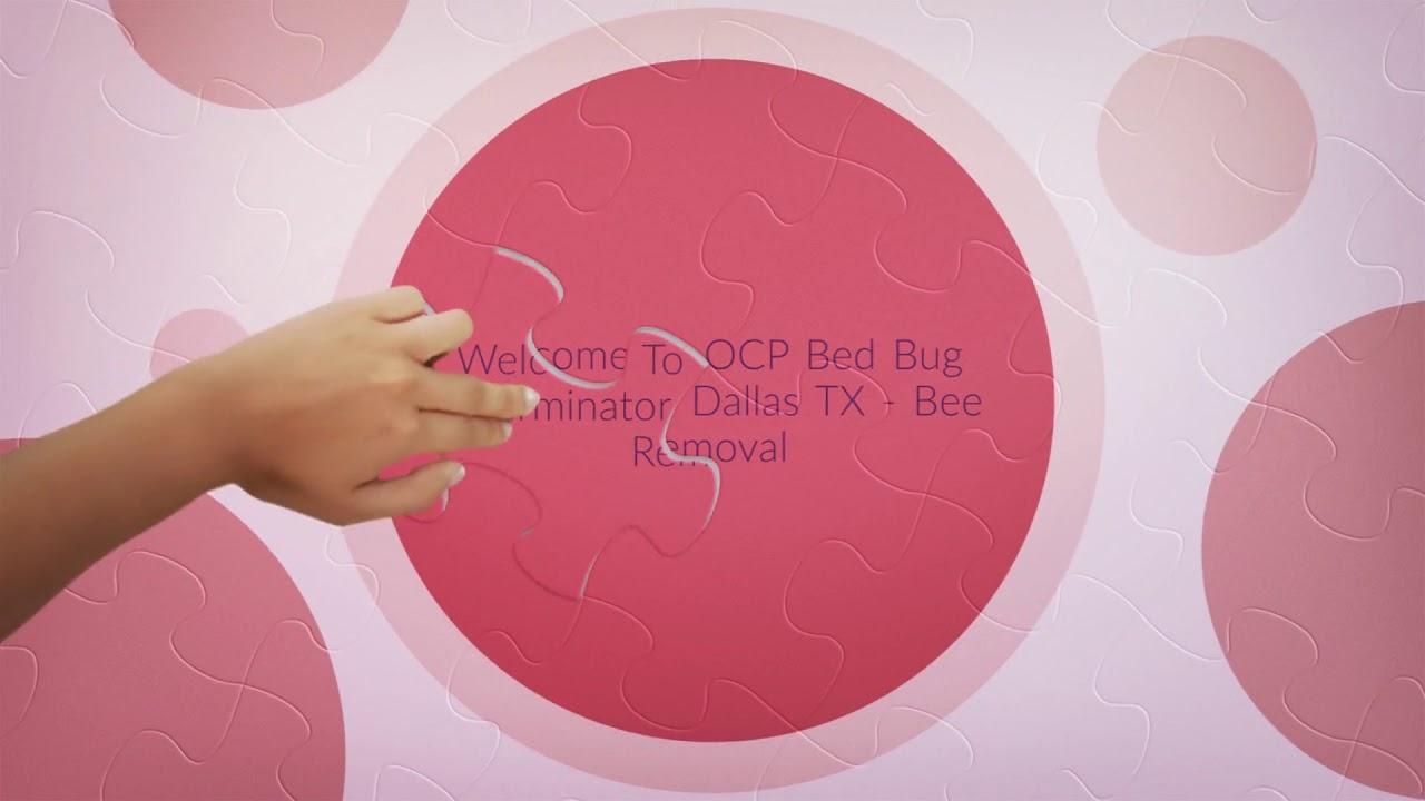 Certified OCP Bed Bug Exterminator in Dallas, TX