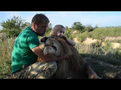 Огромный лев ЧУК