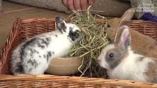 SIANO – Rola siana w diecie zwierzaków roślinożernych