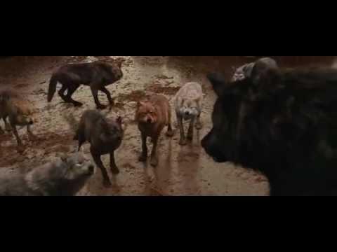 Breaking Dawn Wallpaper Hd Twilight Breaking Dawn Part 1 Talking Wolves Youtube