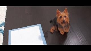 PetSafe® Pet Loo