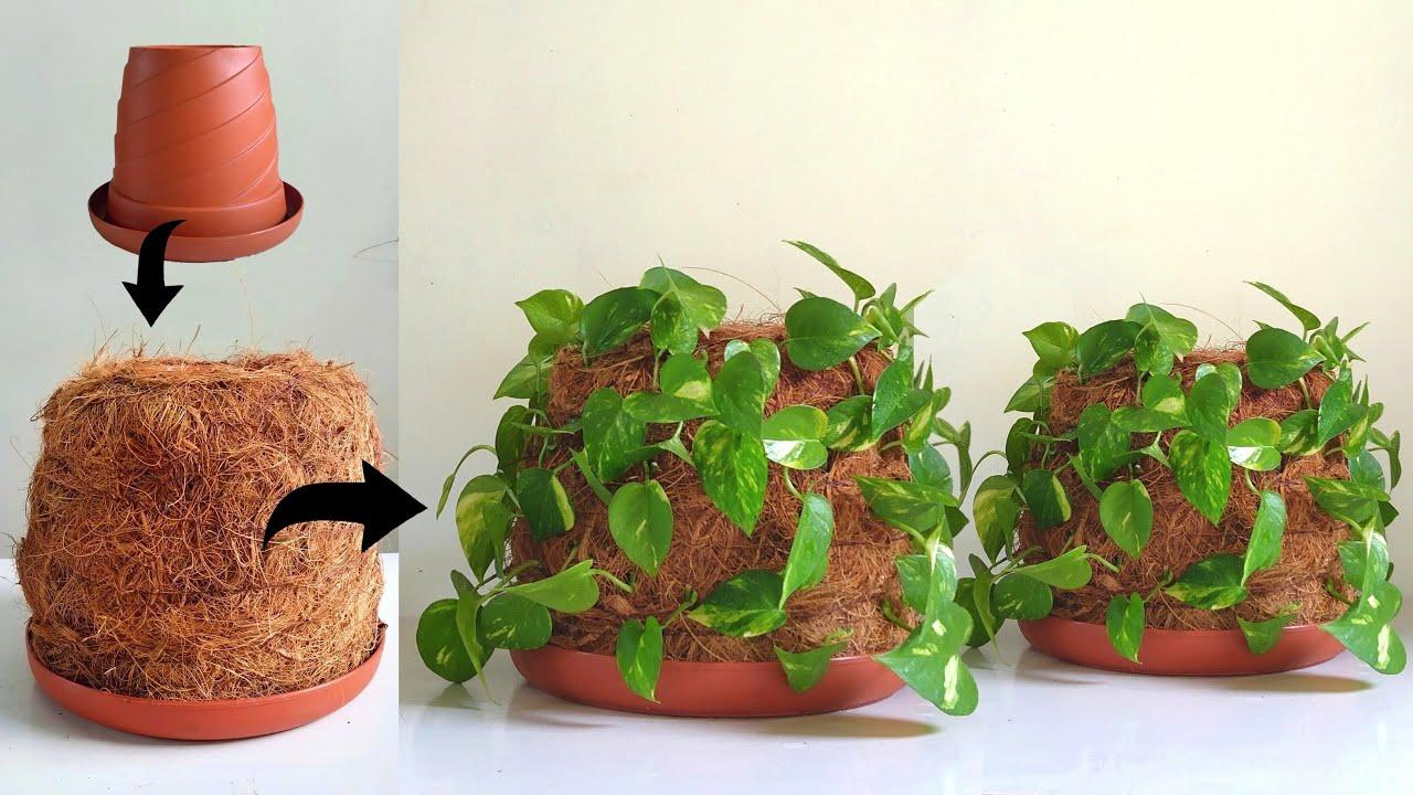 Amazing ideas to growing money plant - Money plant decoration ideas - Gardening ideas