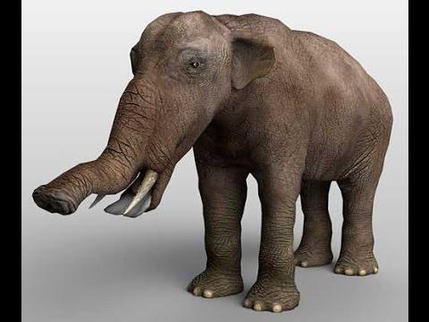 The 10 giant prehistoric animals scary - YouTube