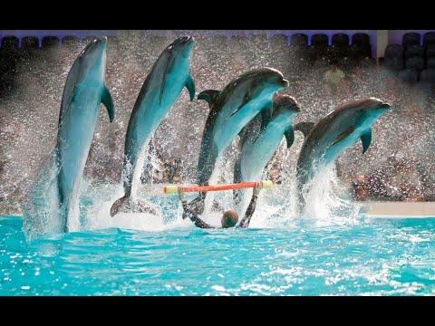Dubai Dolphinarium : Amazing Dolphins and seal show 2019 !!!