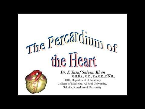 The Pericardium